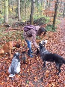 Des chiens obéissants et récompensés !
